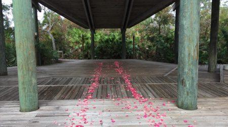 rose petals in Florida