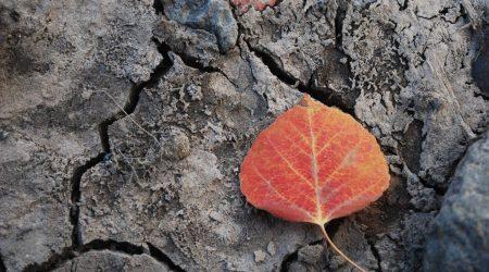 leaf-and-mud
